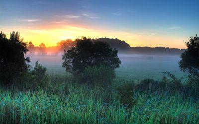Florida Mist - Florida Series