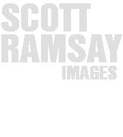 Scott Ramsay Images